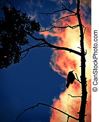 burn.. - abstract; forest fire with bird