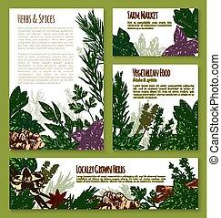 Herb, spice, leaf vegetable sketch banner template