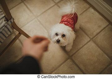 Christmas Dog Treat