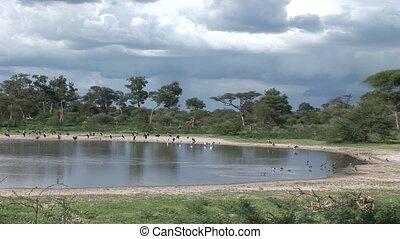 African savannah summer pictrures wild safari Tanzania...