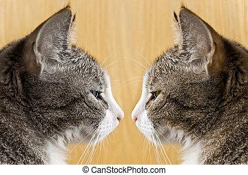 showdown - pair of tomcats
