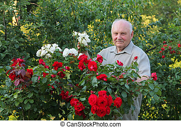 Grower of roses - Old man - grower of roses next to rose...