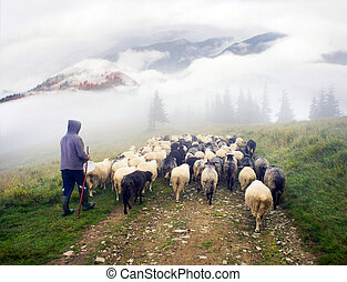 Shepherds and sheep Carpathians - High in the mountains...