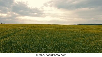 Aerial view Field With Flowering Canola