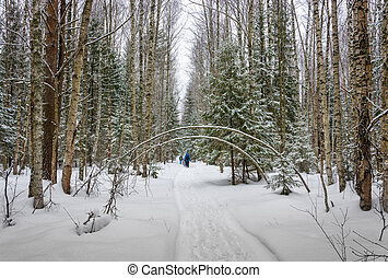 A small group of tourists traveling on snow-covered forest....