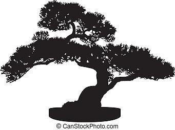 bonsai, árvore, silueta