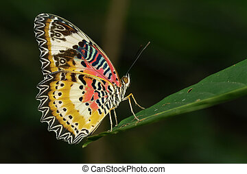 Image of a Plain Tiger Butterfly on green leaves. Insect...