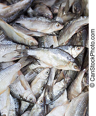 salted fish in brine as background