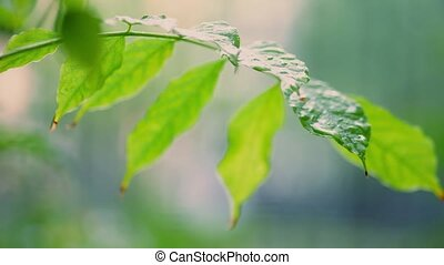 Raindrops fall on green leaf against blurred background