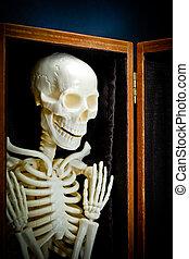 Human skeleton - Bone-white human skeleton in closet....