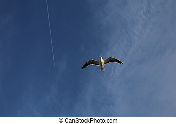 Sea bird in the sky - Sea birds, flying seagull, warmer...