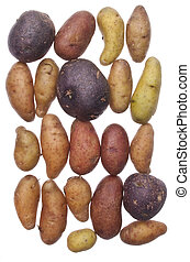 Fingerling Artisan Potatoes - Fingerling Artisan Heritage...