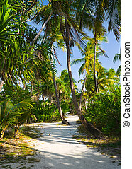 Pathway in tropical jungle