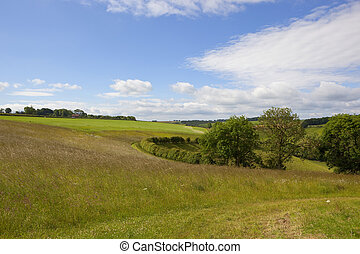 yorkshire wolds scenery - summer scenery with fields trees...