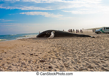 Beached Whale - An image of a whale washed up on shore