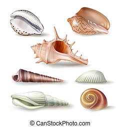Set of illustrations seashells of various kinds in realistic...