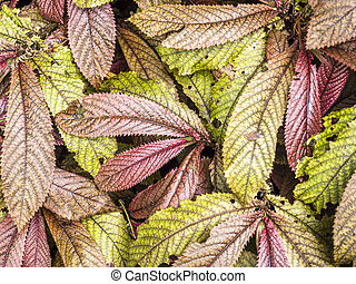 close up of colourfull leaves in autumn