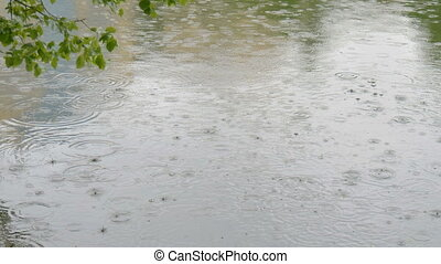 Large drops of rain fall into the city pond. - The rain...