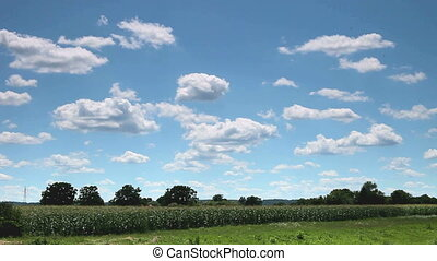 Sky over corn field