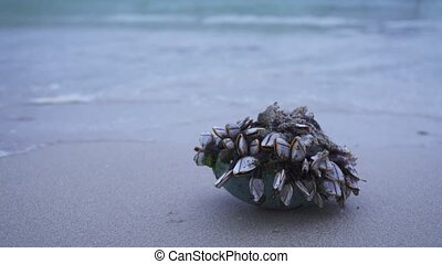 Shellfish stuck marine debris thrown out by waves on shore...