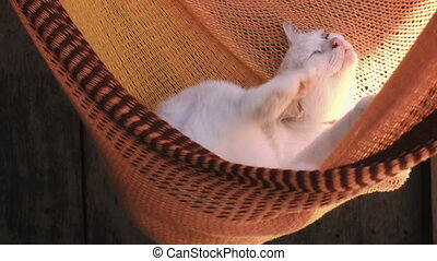 White cat rest is basking in an orange hammock. Cat washes -...