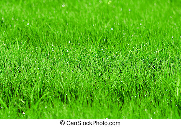 Green grass background with shallow DOF