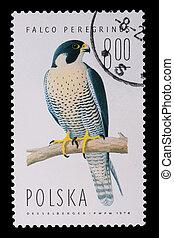Poland - CIRCA 1974: A stamp - Falco Peregrinus - Poland -...