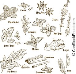 Set of hand drawn culinary aroma herbs and spices