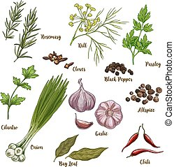 Full color realistic sketch illustration of culinary herbs...
