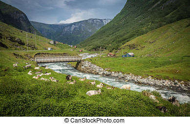 Scenic view of the fjord, photo taken from the Undredal land. Summer in Norway.