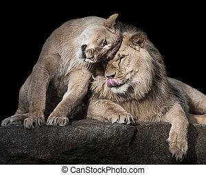 Lion Siblings II