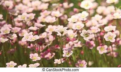 bright flowers background - pink bright flowers close to...