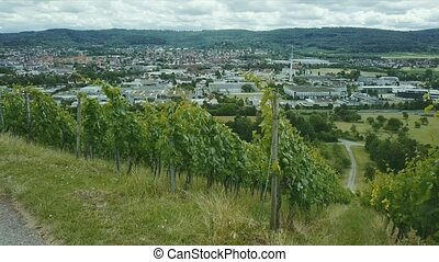 aerial shot of vineyard Holzberg in Germany - aerial shot of...