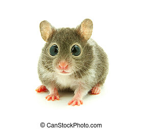 hamster - funny hamster very will be surprised