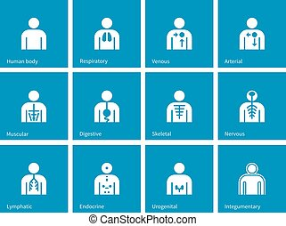 Human Anatomy lymphatic, integumentary, urogenital, endocrine, respiratory, nervous and digestive systems icons on blue background.