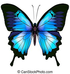 Butterfly vector illustration. Beautiful azure isolated...