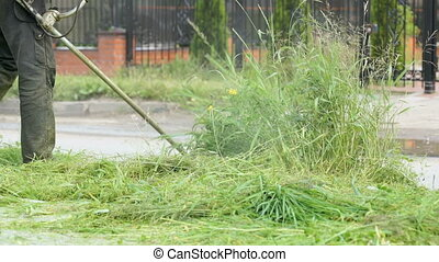 Man trimming grass in a garden using a lawnmower - The man...