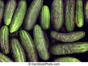 The harvested crop of ripe cucumbers closeup