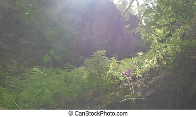 Magic canyon near a mountain river. Plants and trees grow on...