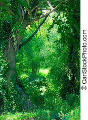 Enchanted Forest - An image of a lush green forest with an...