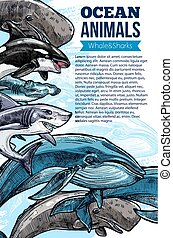Whale and shark ocean animal sketch poster - Whale and shark...