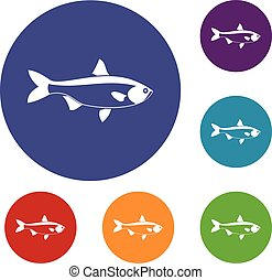 Fish icons set in flat circle reb, blue and green color for...