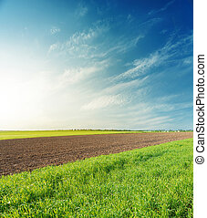 sunset over agricultural spring fields in blue sky