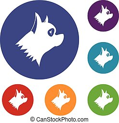 Pinscher dog icons set in flat circle reb, blue and green...