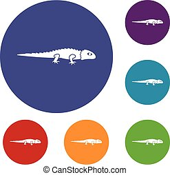 Iguana icons set in flat circle reb, blue and green color...