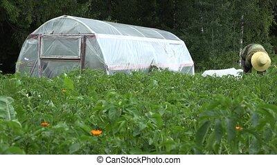 Farmer woman care plants in garden near greenhouse. 4K