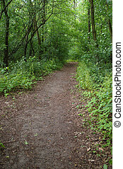 Walking path in forest - Gritty walking path in thick forest