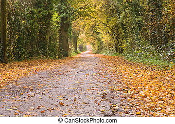 Autumn Forest Pathway - Beautiful vibrant Autumn Fall image...