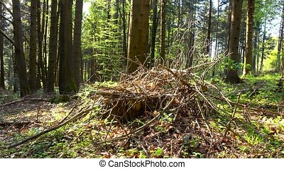 Dry branches are stacked on small glade in sunny forest,...