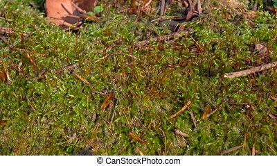 Sprouts moss and dry branches sprout of new plant. Closeups